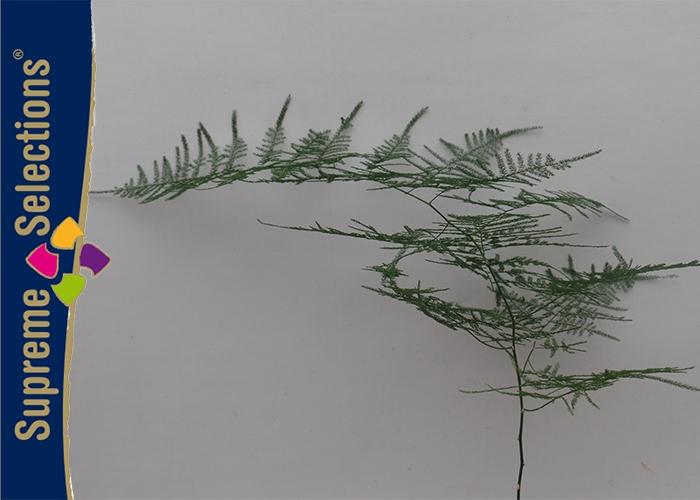 <h4>Asparagus Long</h4>