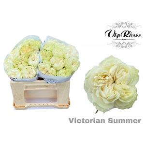 R GR VICTORIAN SUMMER