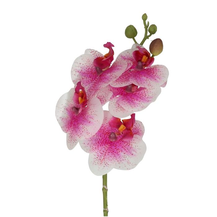 <h4>Silk Phalaenopsis 46cm</h4>
