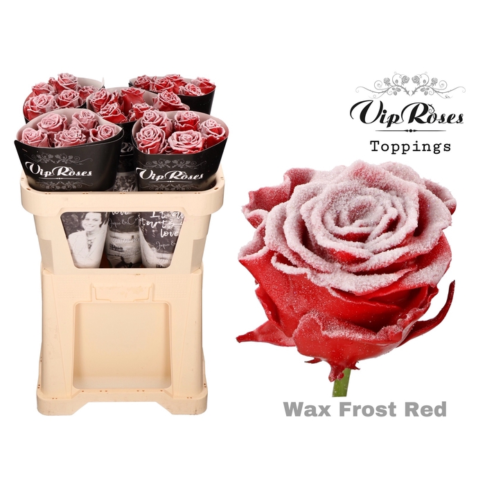 <h4>R GR WAX FROST RED x 25</h4>