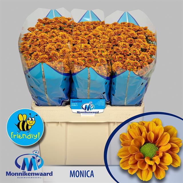 <h4>CHR SAN MONIKA</h4>