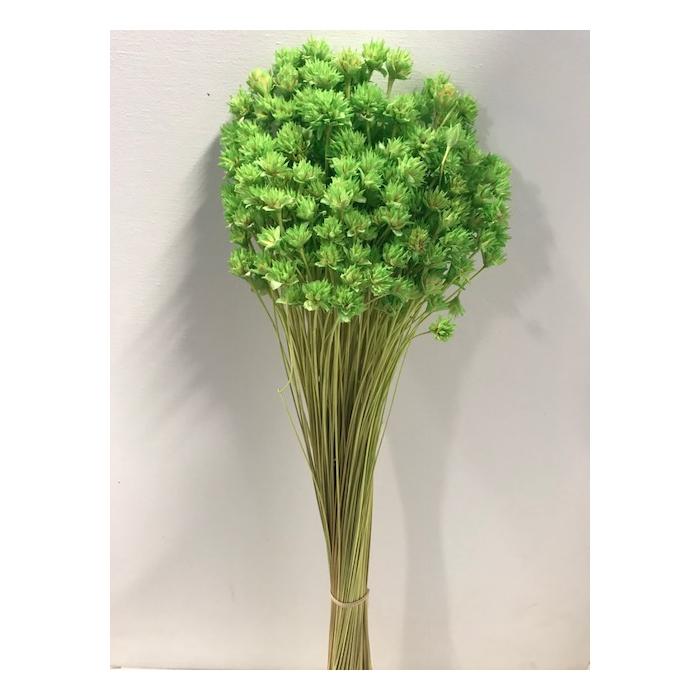 <h4>Hill flower lgroen 45cm 100gr</h4>