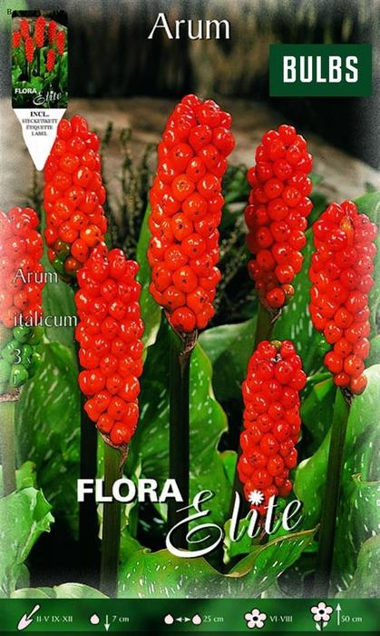 <h4>Z Arum Italicum Bulbs</h4>