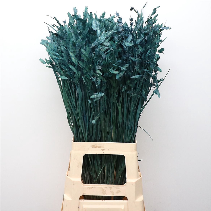 <h4>Chasmanthium Dried Frosted Blue</h4>