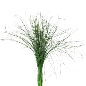 Beargrass Green BEA/0105