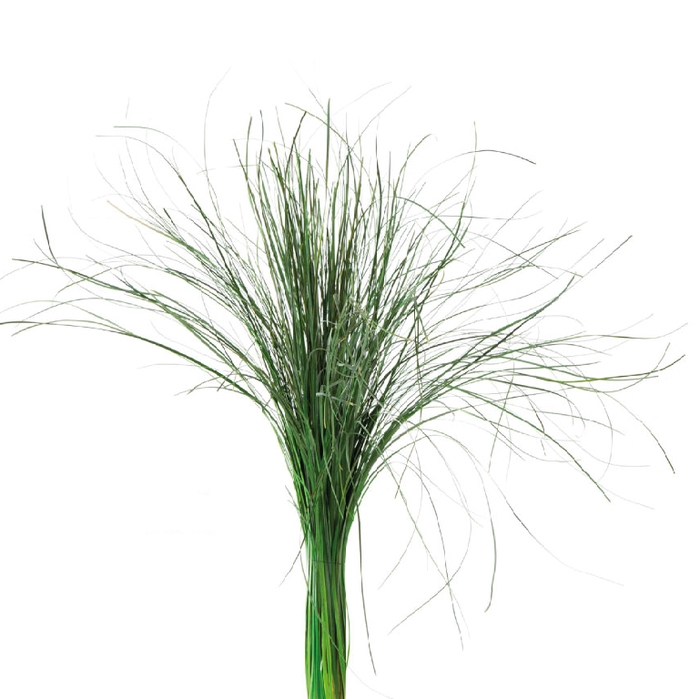 <h4>Beargrass Green BEA/0105</h4>