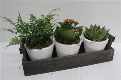 <h4>4324 TRIO Kistje Plants</h4>
