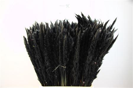 <h4>Pampasgras Dried Fluffy Black (20pcs)</h4>