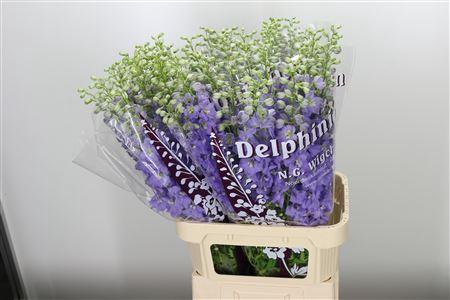 <h4>Delph El Dewi Impressive</h4>