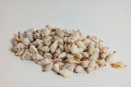 <h4>Basic Antique Aninikad Shell 300gr</h4>