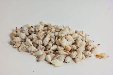 <h4>Basic Antique Aninikad Shell 300gr</h4>