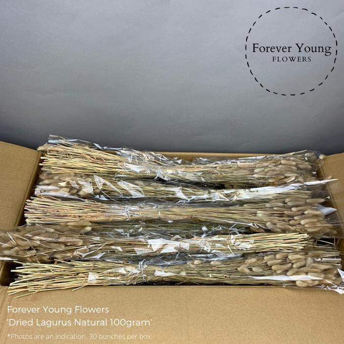 <h4>Dried Lagurus Natural 100gram</h4>