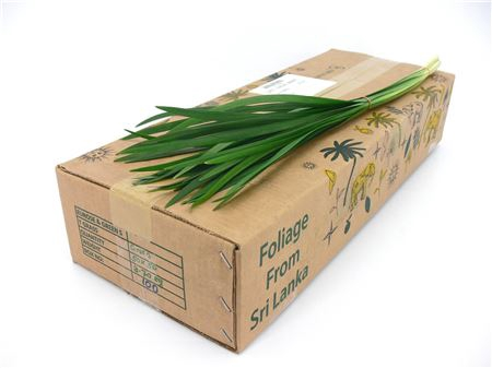 <h4>Dec T-grass Green</h4>