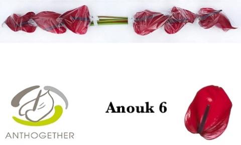 <h4>Anthurium andr. 'Anouk Impr'</h4>