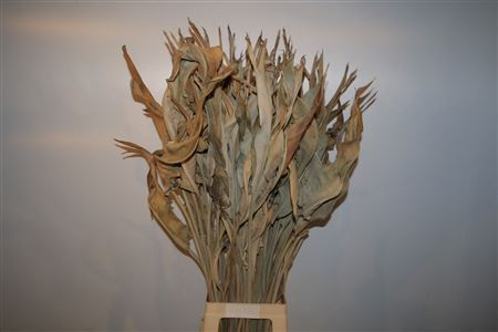 <h4>Dried Strelitziablad Gedroogd Ptk</h4>