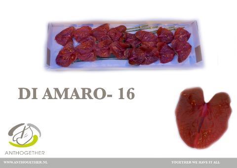 <h4>ANTH A DI AMARO</h4>