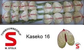 <h4>Anthurium Kaseko</h4>