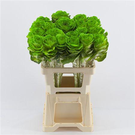 <h4>Brassica Green</h4>