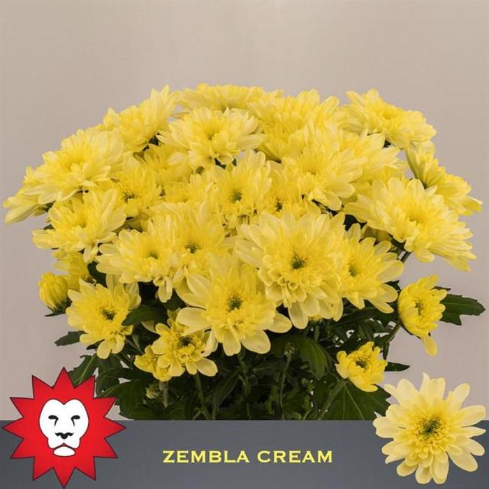 <h4>CHR T ZEMBLA CREAM</h4>
