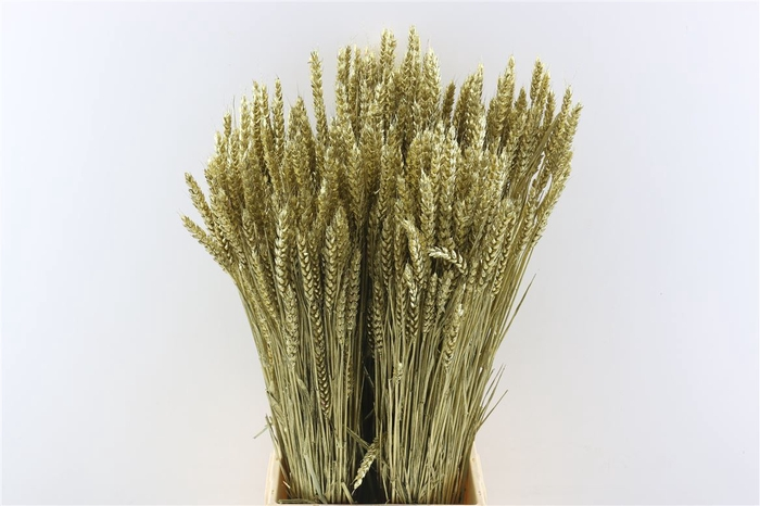 <h4>Dried Triticum Goud</h4>