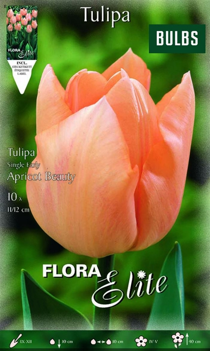 <h4>Z Tulipa Apricot Beauty Single</h4>