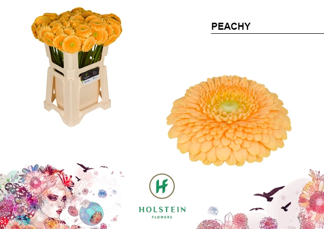 <h4>GE BV water Gerponi Peachy</h4>