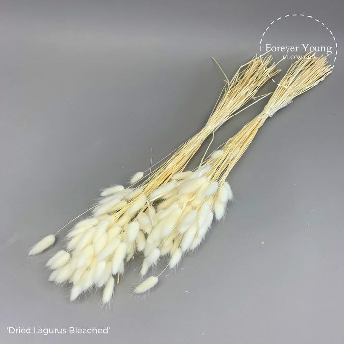 <h4>Dried Lagurus Bleached x30</h4>