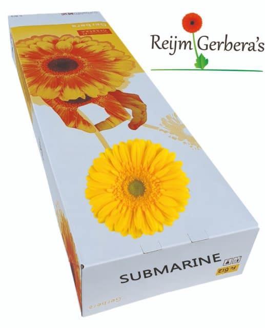<h4>GE GR SUBMARINE</h4>
