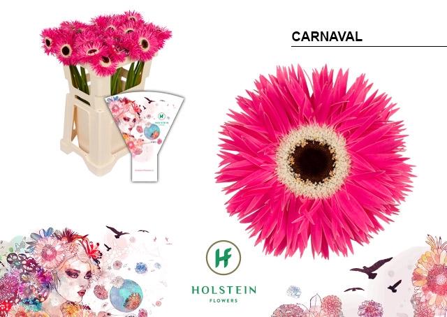 <h4>GE GR GERSP hoes Carnaval</h4>