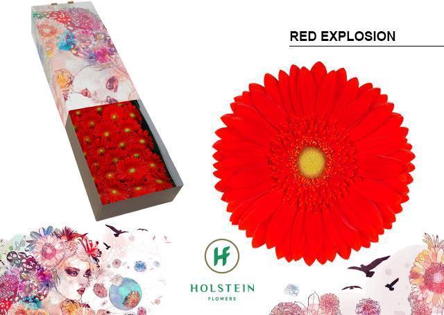 <h4>GE GR RED EXPLOSION</h4>