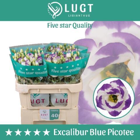 <h4>EUST G EXCAL BLUE PI</h4>