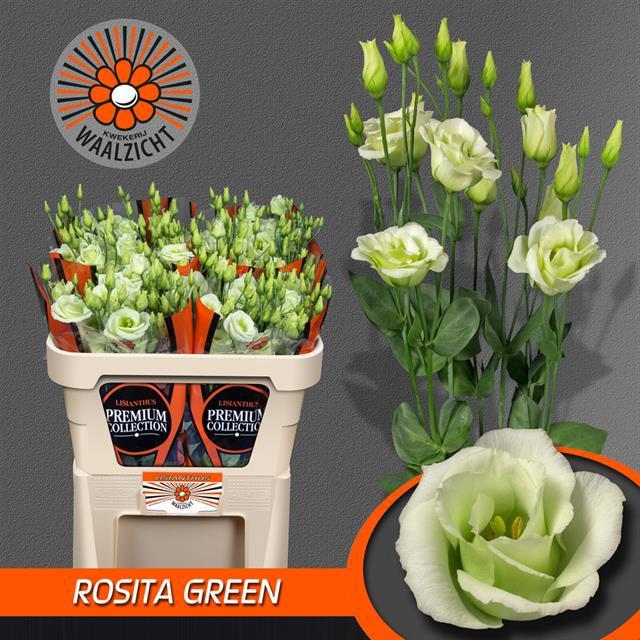 <h4>EUS G ROSI GREEN</h4>