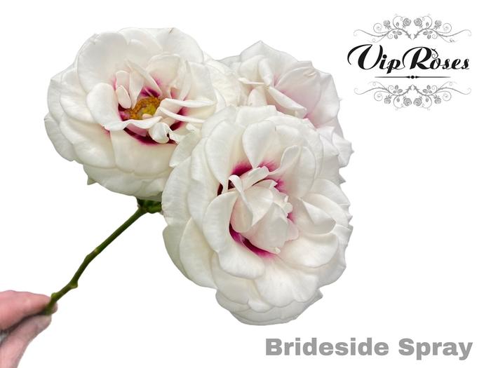 <h4>R TR BRIDESIDE</h4>