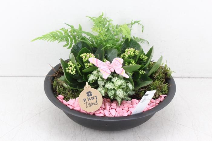 <h4>arr. PL - Zink schaal black - roze</h4>