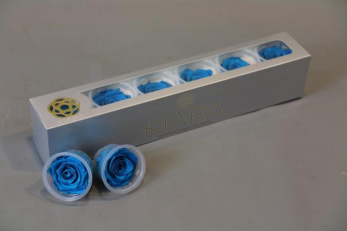 <h4>Rosa Preserved Aquamarine</h4>