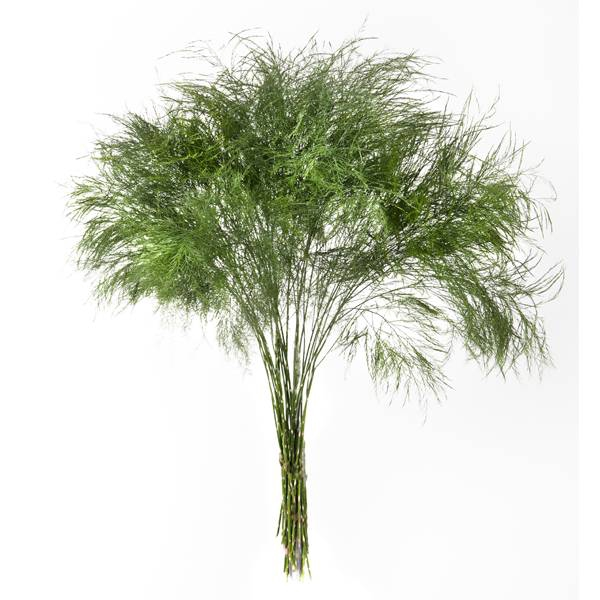 <h4>TREEFERN FLORIDA  R.JONES</h4>
