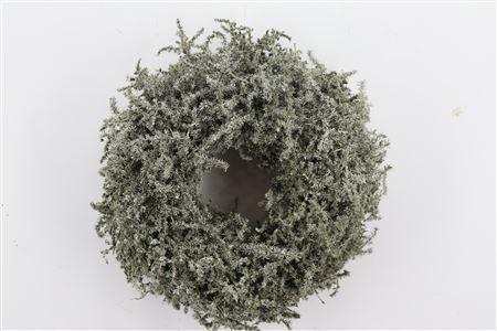 <h4>Wr Asparagus Wax Antique Olive 35cm</h4>