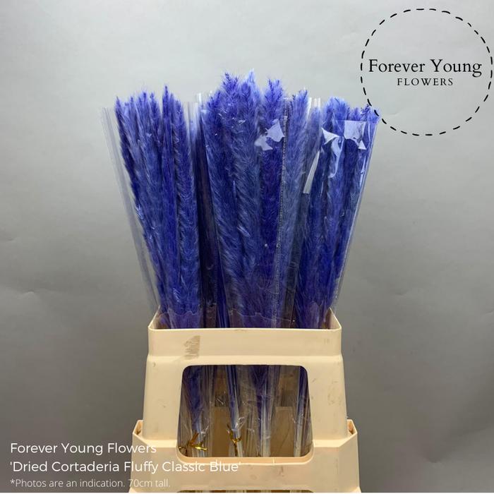 <h4>Dried Cortaderia Fluffy Classic Blue</h4>