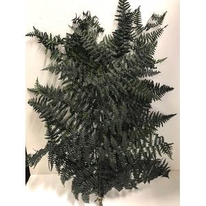 Leather Fern 60gr groen