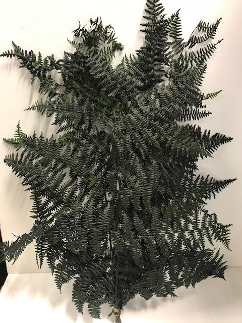 <h4>Leather Fern 60gr groen</h4>