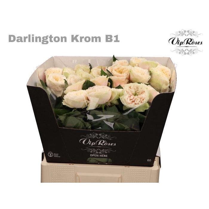 <h4>R GR DARLINGTON KROM B1</h4>