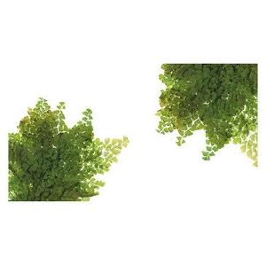 Fern Lutti Verde FLU/9103