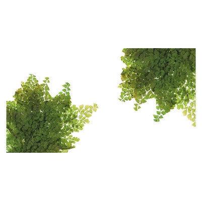<h4>Fern Lutti Verde FLU/9103</h4>