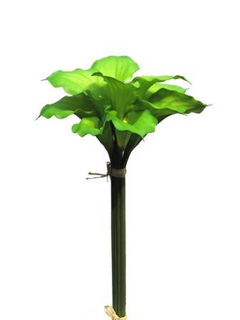 <h4>Calla bundle x12 green 45cm</h4>