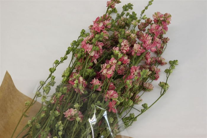 <h4>Dried Delphinium Pink</h4>