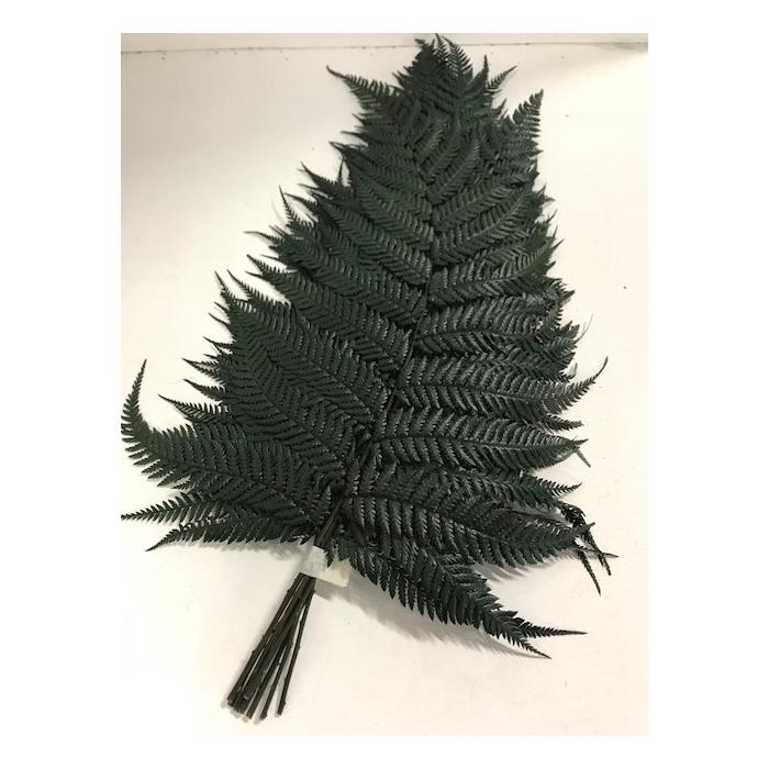<h4>Brilliant fern 30/40cm</h4>