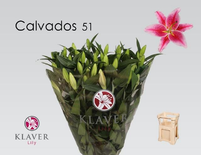 <h4>LI OR CALVADOS</h4>