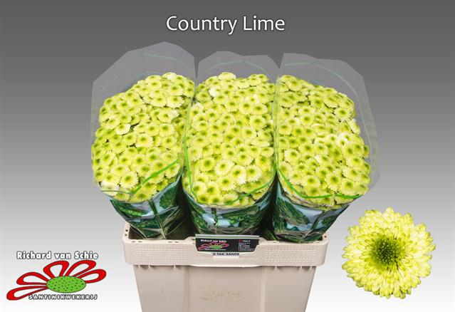 <h4>CHR SAN COUNTRY LIME</h4>