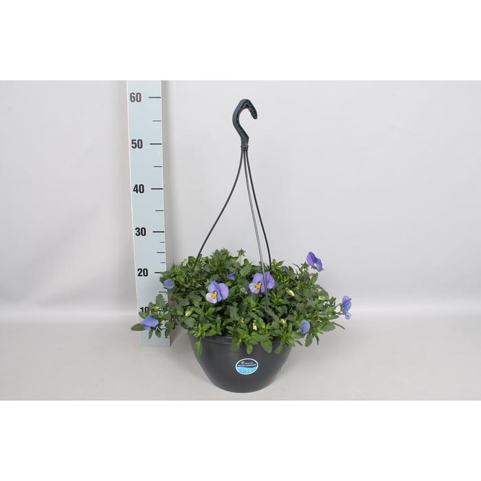 <h4>Hangpotten 27 waterreservoir Viola Coolwave Blue skies</h4>