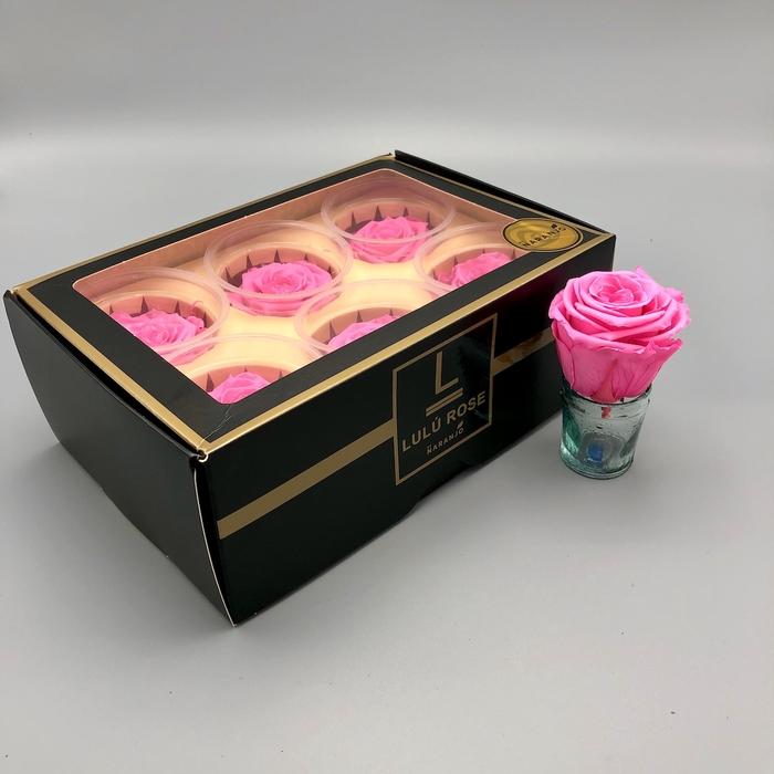 <h4>R PR Lulu (Medium) Pink</h4>